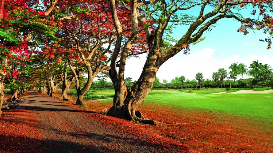 The flamboyant trees of the red alley are well worth a visit at the end of the year
